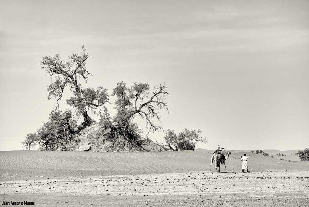 Árboles del desierto. Marruecos