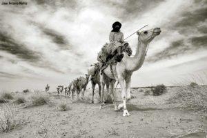 Caravana Mauritania sepia.