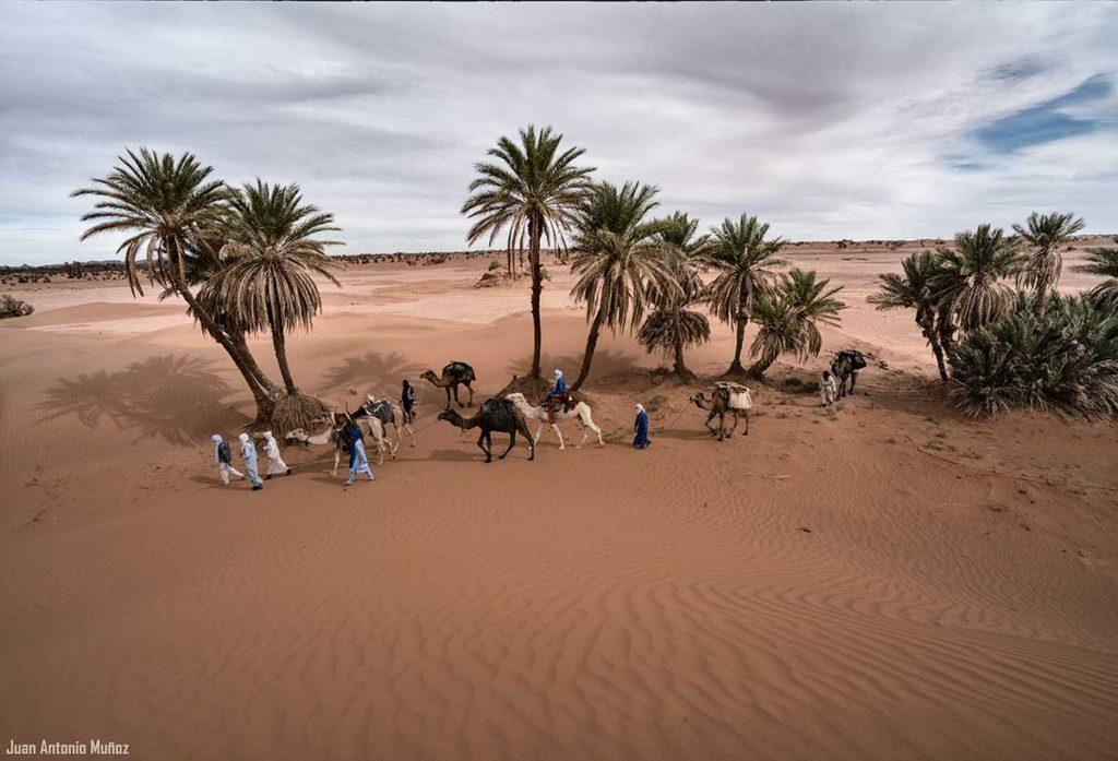 Caravana entrando oasis. Marruecos